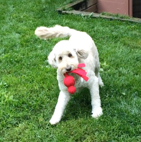 Daisy Playing - still shot
